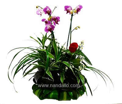 Arreglo de orquídeas y rosa