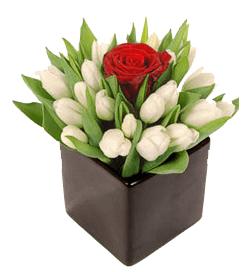 Arreglos de tulipanes blancos